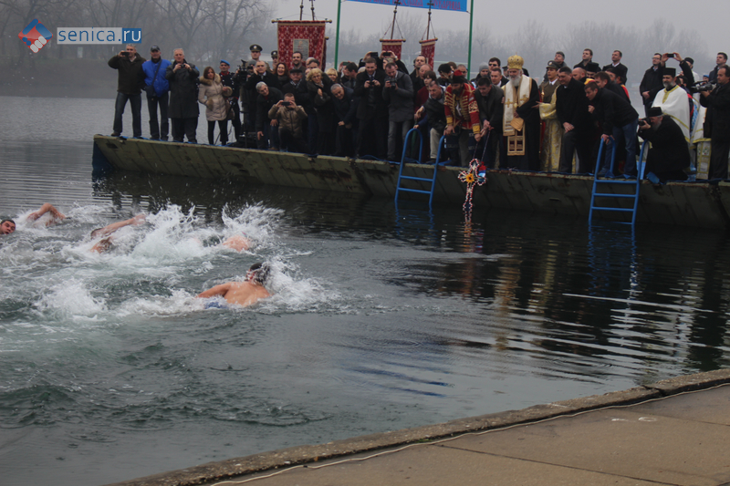 Заплыв за Богоявленским крестом на праздник Крещения Господнего в Белграде