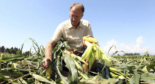"Америка ""продавливает"" ГМО в Сербии"