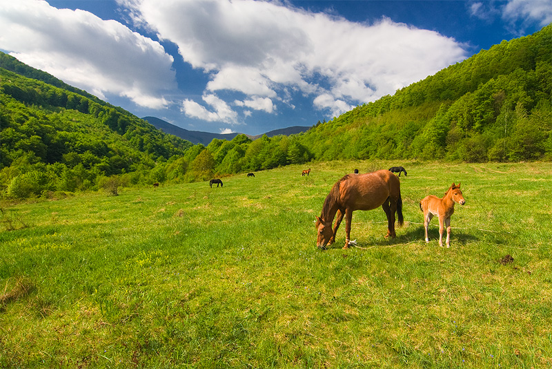Животный мир Югославии