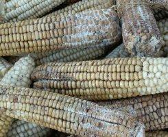 Заплесневелая кукуруза